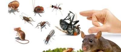 شركة رش مبيد حشرات بالمدينة