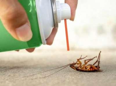 شركة رش حشرات بالطائف