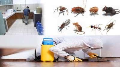 شركة رش حشرات بجدة