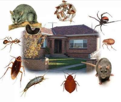 شركة ابادة حشرات بالطائف